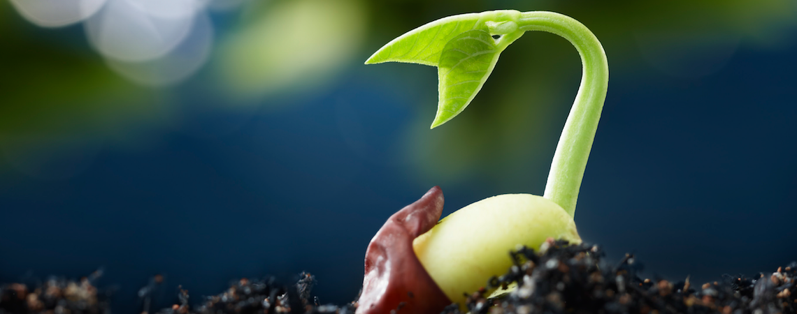 Germination header – Evolve your business with biomimicry